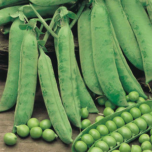 Peas (Douce Provence)