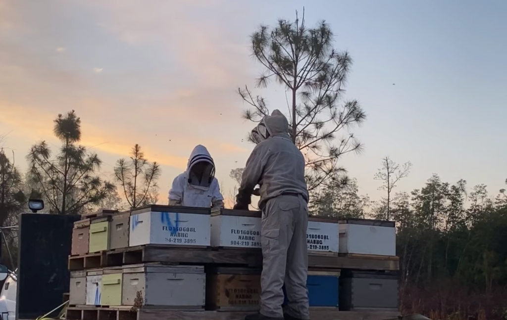 How A Commercial Beekeeper Moves Bees