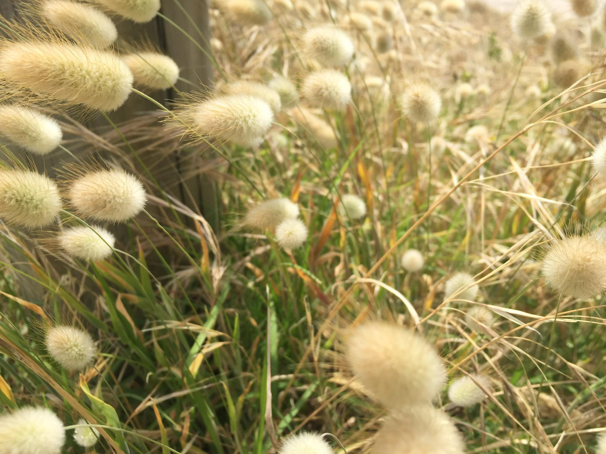 Bunny Tails Bunch