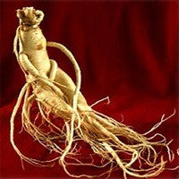 Ginseng. Highest Quality Red Panax Korean Ginseng. Stimulant Energy Libido Enhancer. Natural Naturopathic Herbal Remedy.