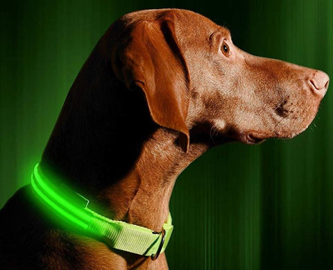 Image of Get A FREE LED Bright Glow In The Dark Dog Collar For Your Dog Now!  Which colors do you want?