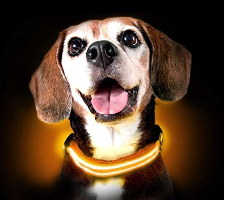 Get A FREE LED Bright Glow In The Dark Dog Collar For Your Dog Now!  Which colors do you want?