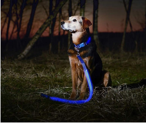 Image of The Perfect LED Leash For Your Dog + You Get FREE SHIPPING & SAVE 55% When Your Order Right Now! PICK THE COLOR YOU WANT BELOW: