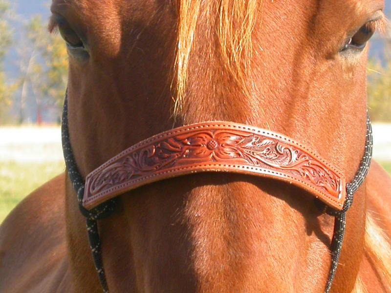 Double Diamond Floral Nose Band Halter - Animal Health Express