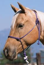 Buck Brannaman Rope Halter - Animal Health Express