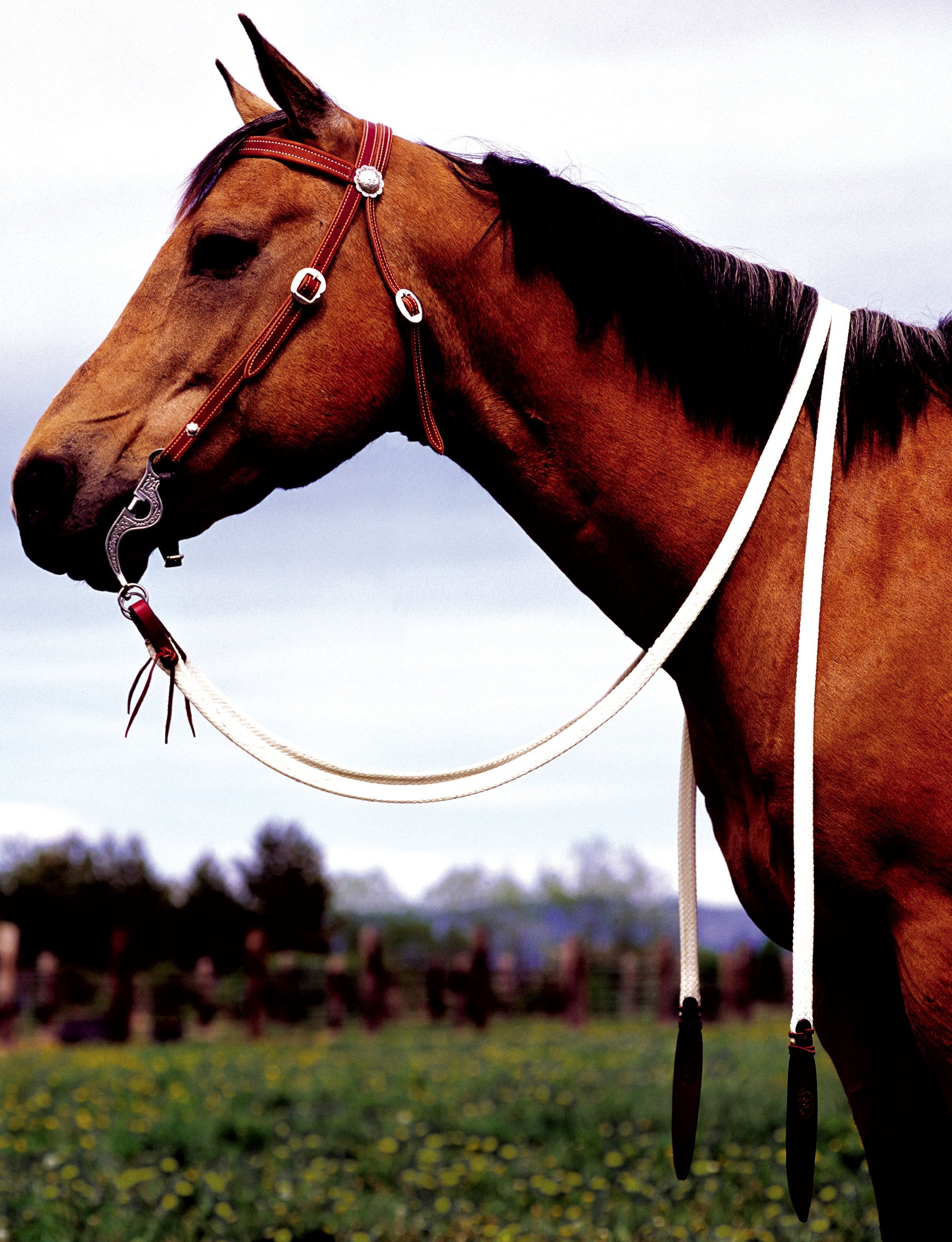 Double Diamond Flat Waxed Split Reins - Animal Health Express