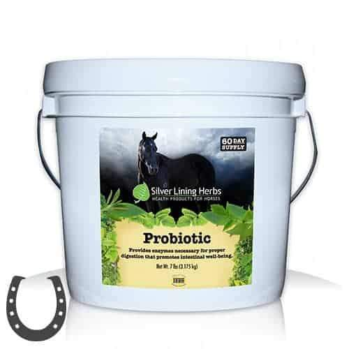 Sliver Lining Herbs Probiotic for Horses