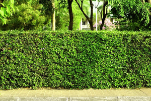 Why You Should Choose Hedging Over Fencing