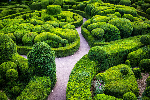 Topiary 101 - Choosing Plants for Hedge Sculpting