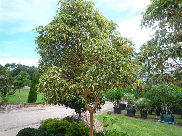 Thinking of growing deciduous trees?