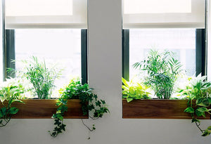 Green up Your Apartment with These Easy Tips