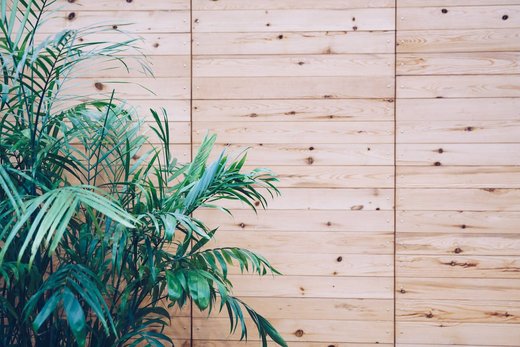 House plant on wooden wall