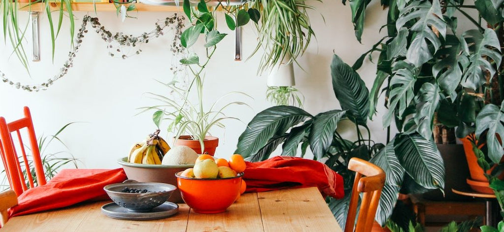 Kitchen with Fruit and plants