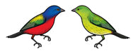 Jewelry - Earrings, Painted Bunting