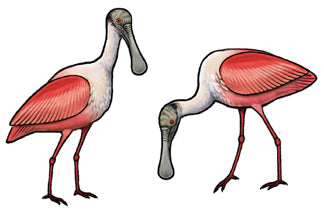 Jewelry - Earrings, Roseate Spoonbill