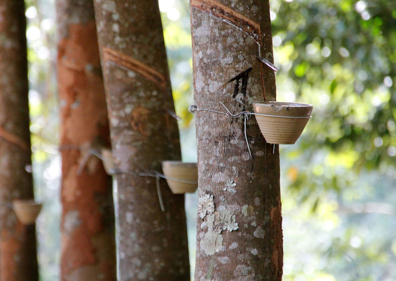 "The ""Rubber-Tapping"" Process: latex spigot tapped into rubber tree draining into a collection bowl"