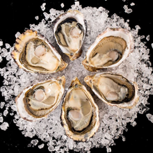 Load image into Gallery viewer, Extra Small Capital Oysters