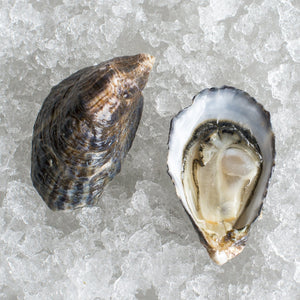 Extra Small Capital Oysters
