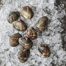 Load image into Gallery viewer, Manila Clams - By the pound