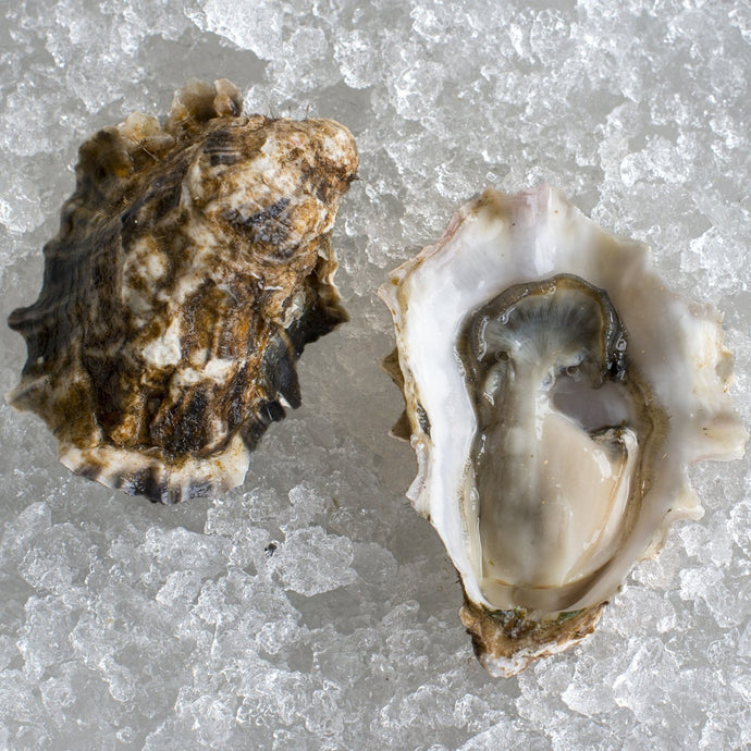 Extra Small Glacier Point Oysters