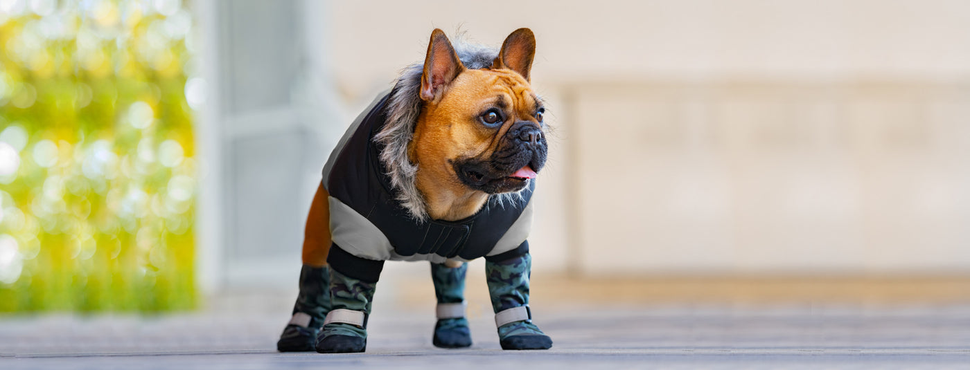 Why Do Dogs Need Protective Boots for Winter?