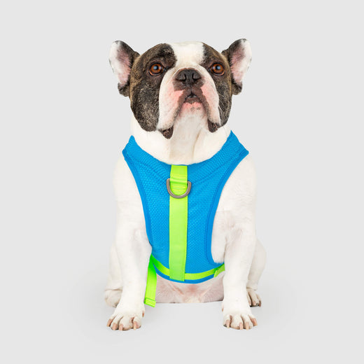 Chill Seeker Cooling Harness in Blue Green, Canada Pooch Dog Harness