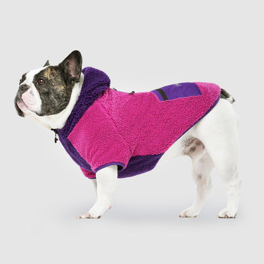Cool Factor Dog Hoodie in Pink Puriple, Canada Pooch Dog Sweater