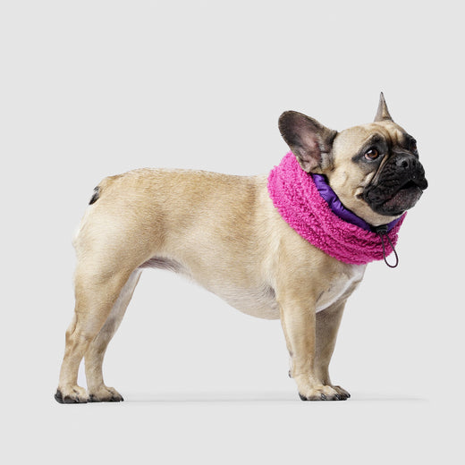 Cool Factor Dog Snood in Pink Purple, Canada Pooch Dog Snood