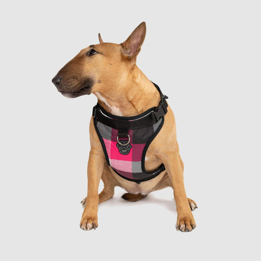 The Everything Dog Harness in Pink Plaid, Canada Pooch Dog Harness