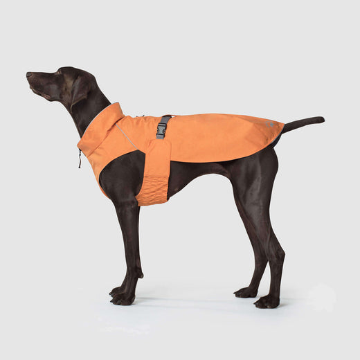 Expedition Raincoat in Orange, Canada Pooch Dog Raincoat