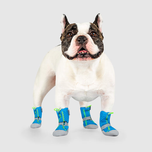 Hot Pavement Boots in Blue Green, Canada Pooch Dog Boots
