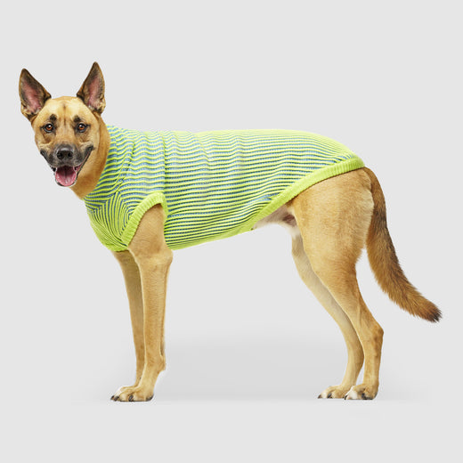 Icon Sweater Dog Sweater in Green Blue, Canada Pooch Dog Sweater