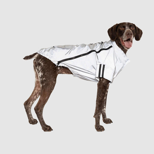 Night Vision Reflective Jacket, Canada Pooch Dog Jacket