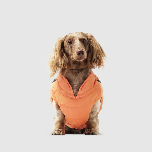Peak Performance Dog Vest in Orange, Canada Pooch Dog Vest