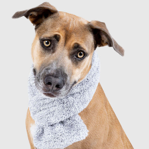 Snuggle Dog Scarf in Grey, Canada Pooch Dog Scarf