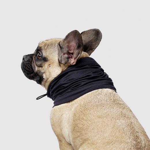 Thermal Dog Snood in Black, Canada Pooch Dog Snood