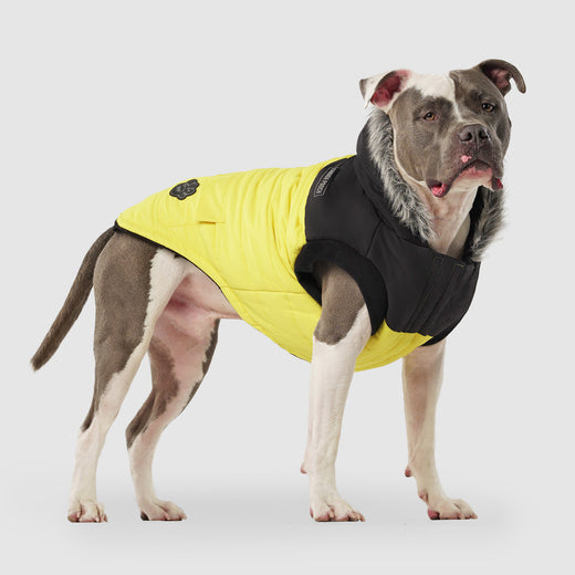 The True North Dog Parka in Yellow, Canada Pooch