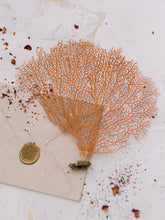 Load image into Gallery viewer, Coral Sea Fan