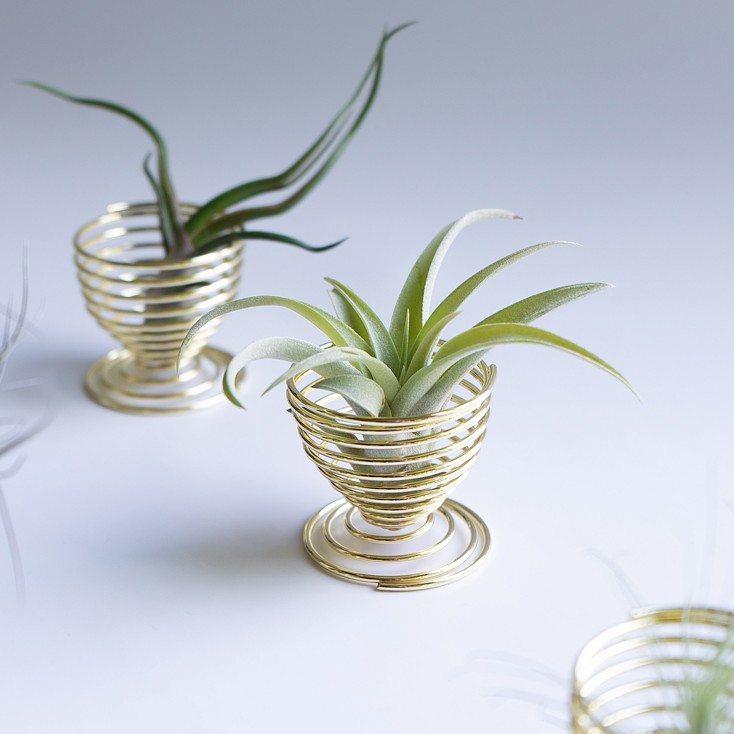 Air Plant Holders - Gold (Pack of 4)