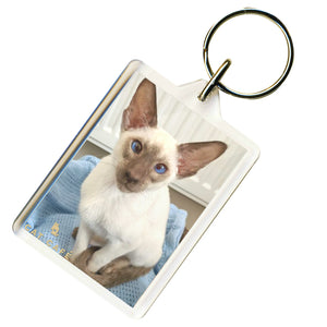 Cat Cafe Liverpool - Sebastian Keyring