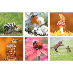 Photographic wildlife set of 6 greeting cards