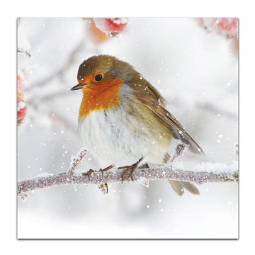 Photographic robin - pack of 10 Christmas cards with envelopes