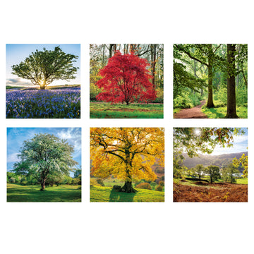 Trees set of 6 greeting cards