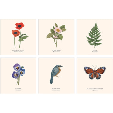 Botanical designs set of 6 greeting cards