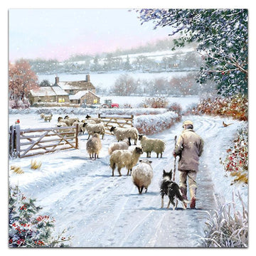 The Shepherd - Welsh/English bilingual - pack of 10 Christmas cards with envelopes