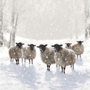 Sheep In Snow Christmas Card (English & Welsh)