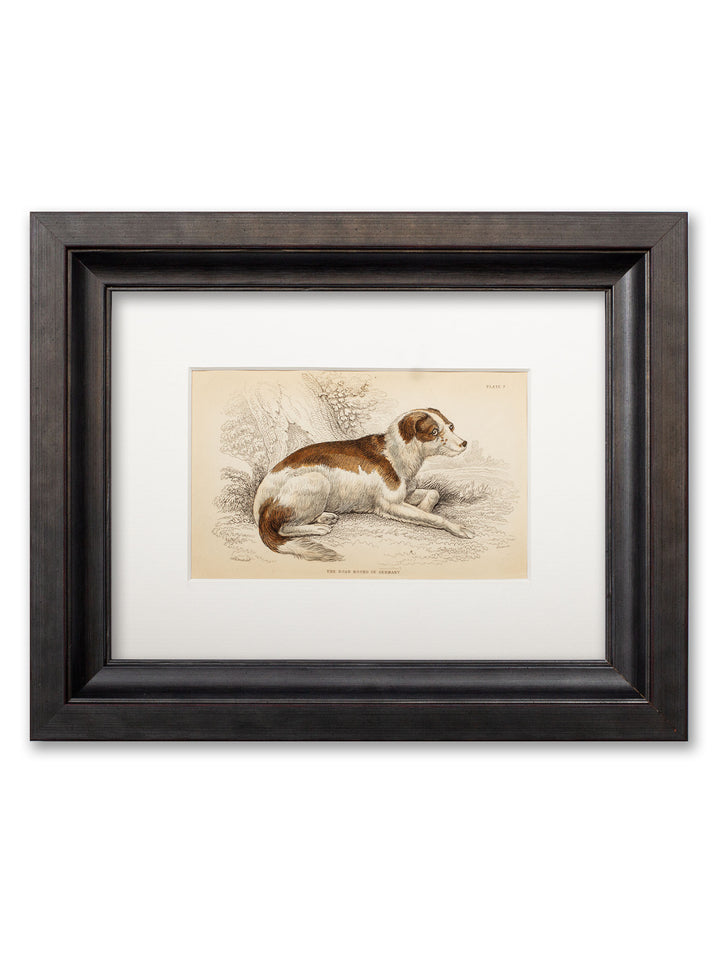 c.1839 William Jardine - Framed Dog Print - Plate 7 - Boar Hound - SALE