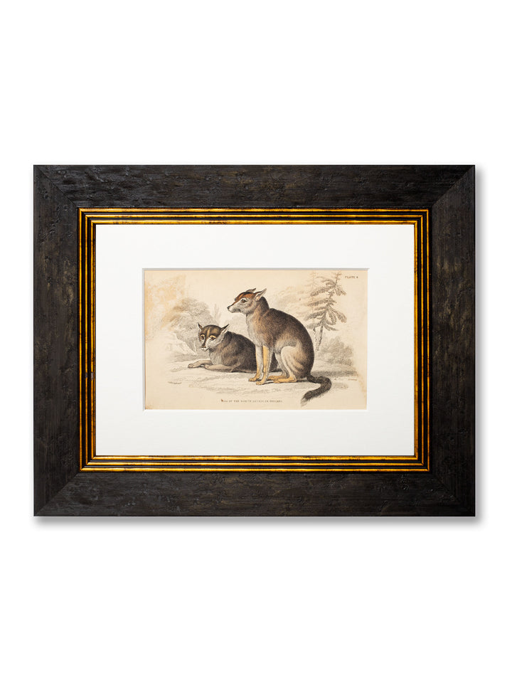 c.1839 William Jardine - Framed Dog Print - Plate 8 - Dog of the North American Indians