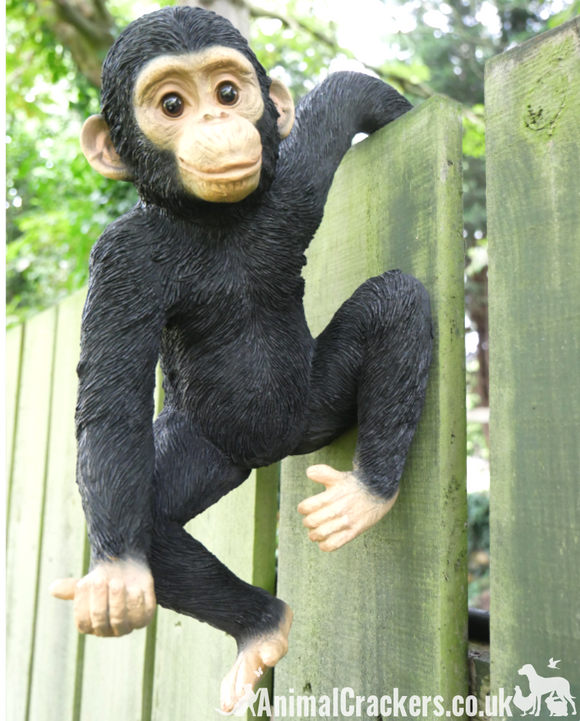 Fence Hanging Monkey ornament sculpture, novelty garden decoration, Chimp lover gift