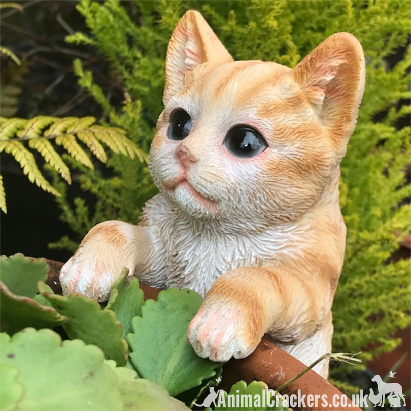 GINGER CAT POT HANGER novelty resin garden ornament decoration Cat lover gift